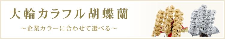 大輪カラフル胡蝶蘭