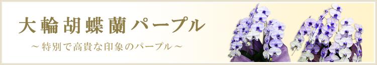 大輪胡蝶蘭パープル