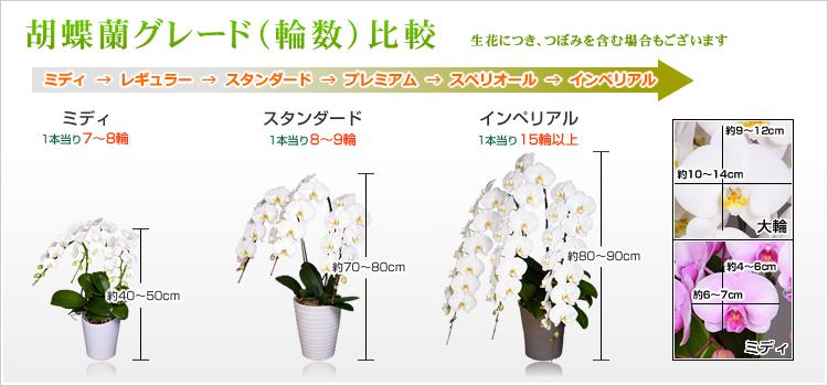 胡蝶蘭大きさ比較