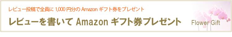 レビューを書いてAmazonポイントプレゼント