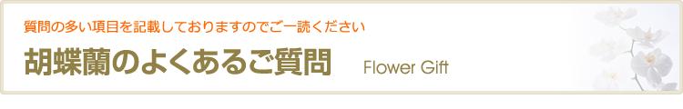 胡蝶蘭のよくある質問