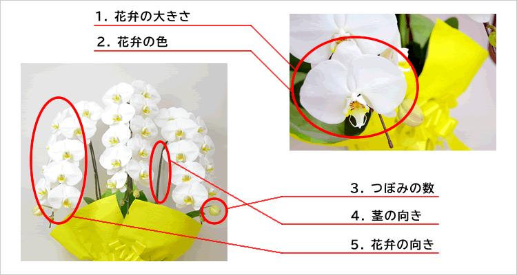胡蝶蘭評価のポイント