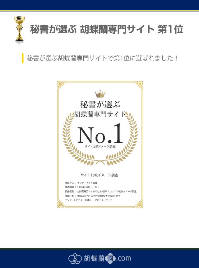 秘書が選ぶ胡蝶蘭専門サイト第1位
