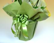 緑系ラッピング金リボン