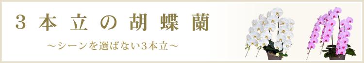 3本立の胡蝶蘭