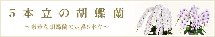 5本立の胡蝶蘭
