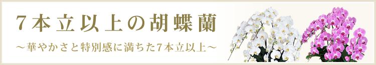 7本立以上の胡蝶蘭
