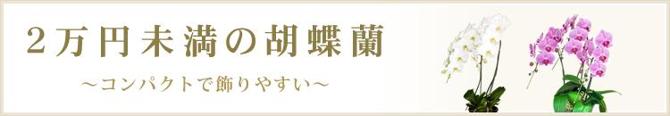 2万円未満の胡蝶蘭