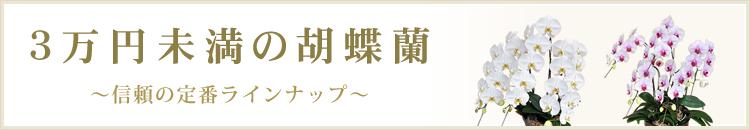 3万円未満の胡蝶蘭