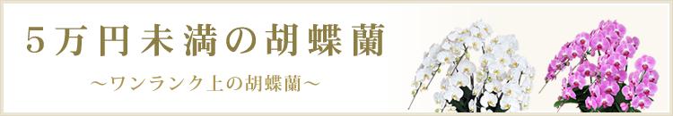 5万円未満の胡蝶蘭